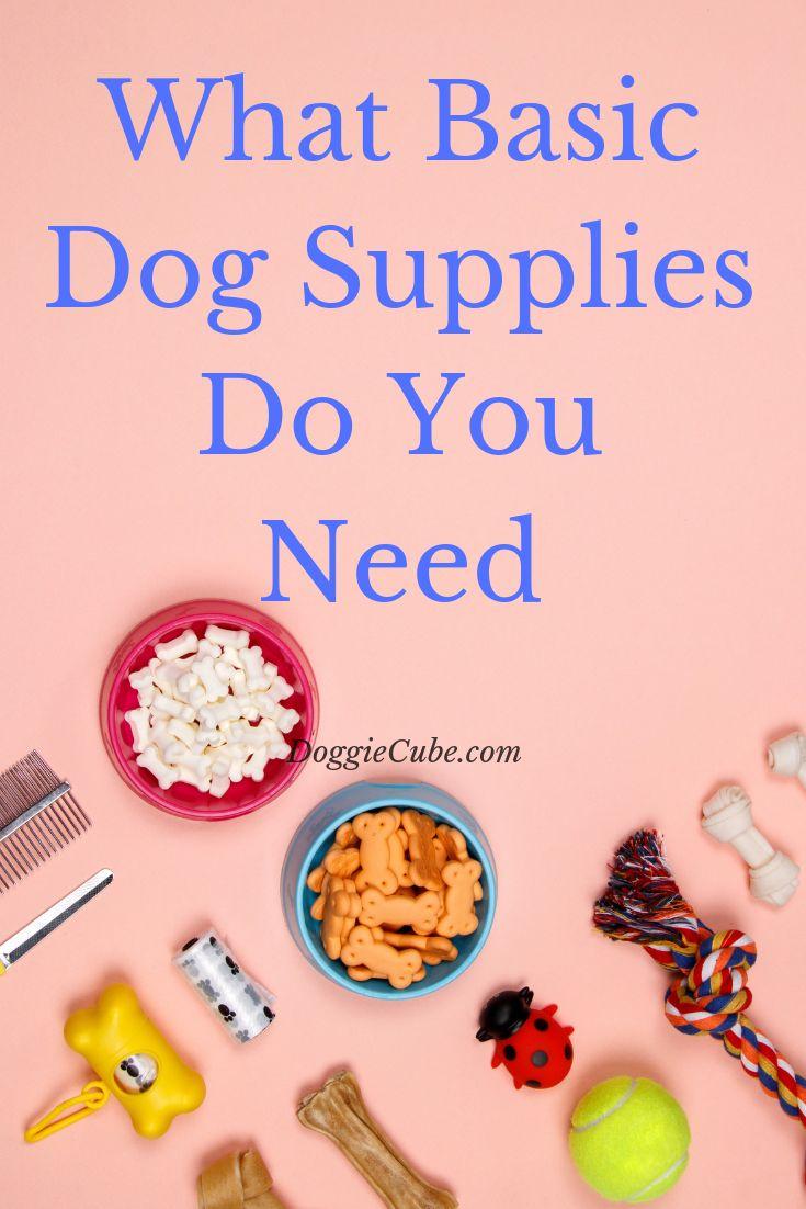 ¿Qué suministros básicos para perros necesitas?   – Dogs Design