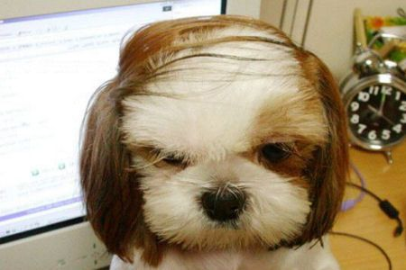 the cutest dog comb over ever!