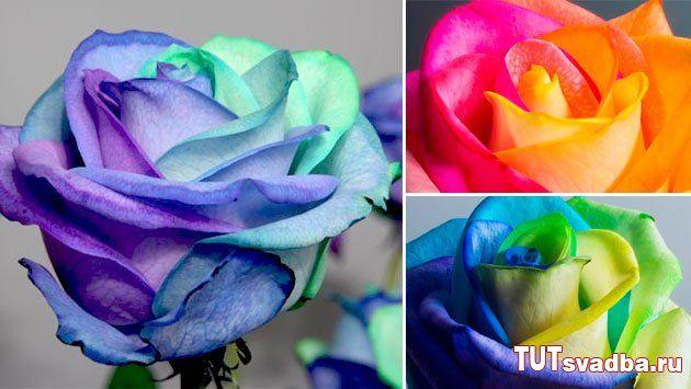 Радужные розы - идея для свадьбы. Обсуждение на LiveInternet ...