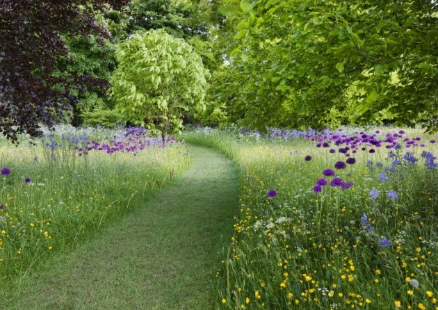 Cuts paths through long wild grasses and annuals