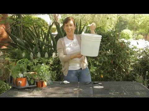 Topsy Turvy, Garden Containers, Upside Down Pots, Growing Tomatoes, Peppers & Herbs Update 7 - YouTube