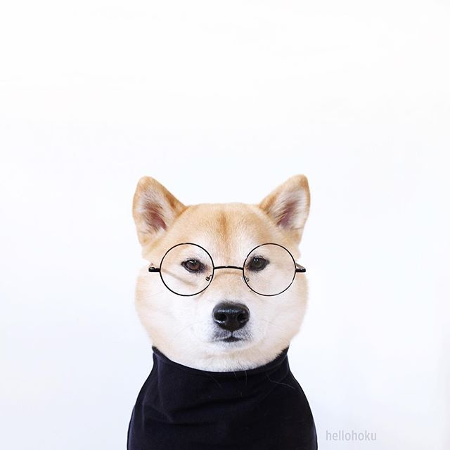 """Stay hungry. Stay foolish. And sometimes, just stay."" -Shibe Jobs"