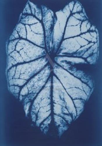 Leaf Study  - Hager www.easyart.com