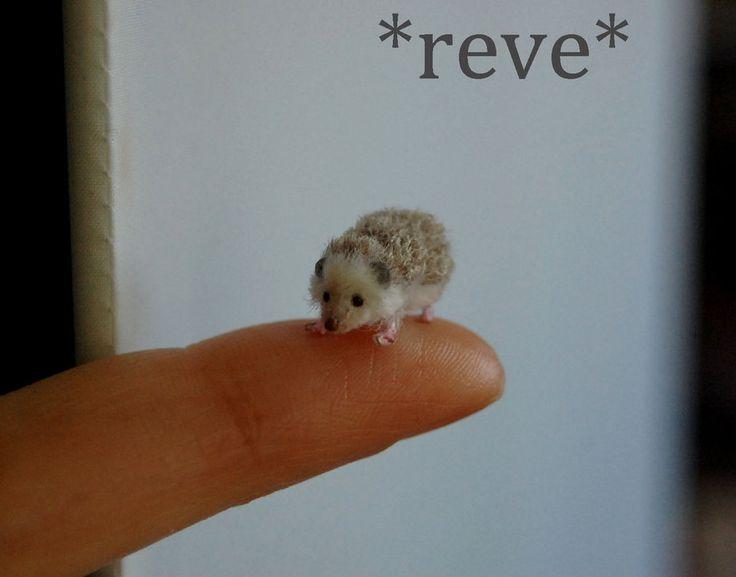 Handmade 1:12 Miniature Sculpture Hedgehog by ReveMiniatures