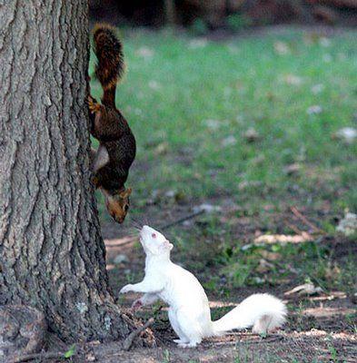 .: White Animals, Critters, Albino Animals, Squirrels, Creatures, Albinosquirrel, Amazing Animals, Albino Squirrel