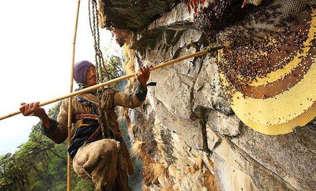 ΕΙΔΗΣΕΙΣ: Το μυστήριο με το «μέλι της τρέλας». Πωλείται πάνω από 100 δολάρια το κιλό και είναι παραισθησιογόνο. Παράγεται από τεράστιες μέλισσες και μπορεί να σκοτώσει