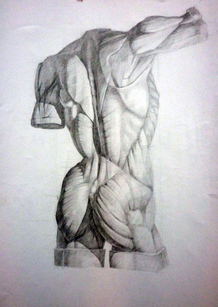 анатомический рисунок тела карандашом: 21 тыс изображений найдено в Яндекс.Картинках