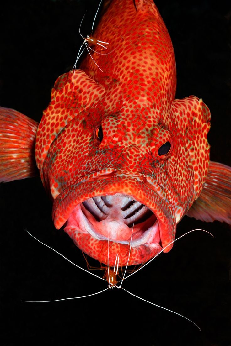 3922 best Colorful Fish images on Pinterest | Marine life, Ocean ...