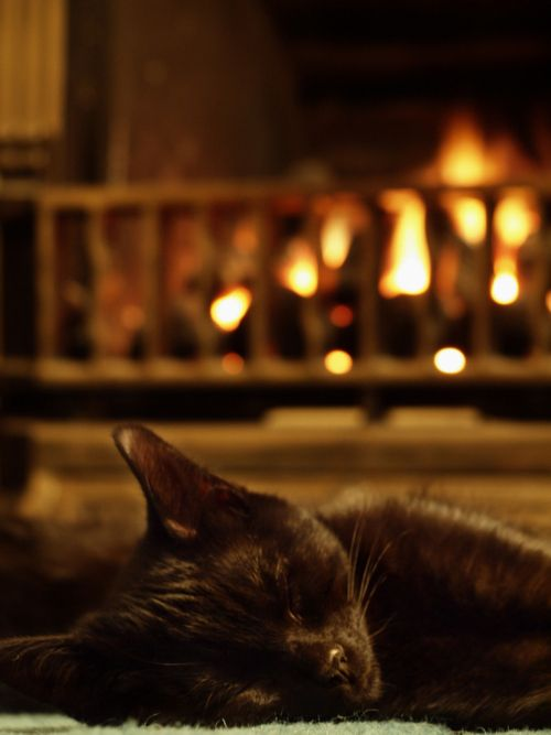296 best Cats by the Fireside... images on Pinterest | Hearth ...