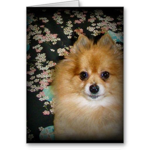 Pomeranian dog Blank Card
