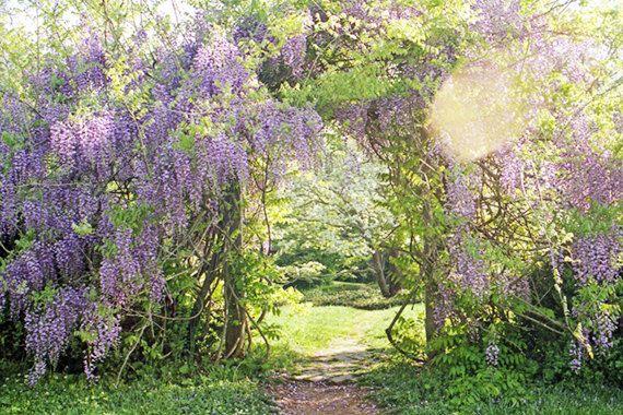 Secret Garden: 1679 Best Images About Amazing DOORS,GATES,Entryways