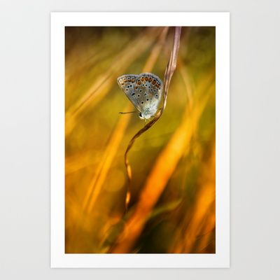 Common blue Art Print by Digital Dreams - $14.99