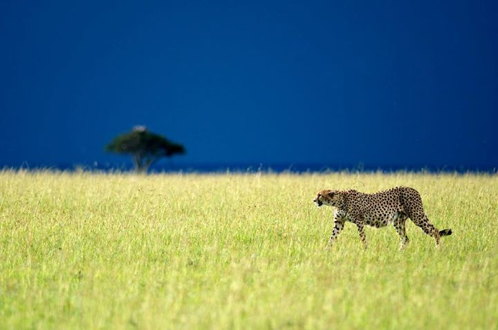 Christian Baillet vous emmène découvrir l'Afrique..