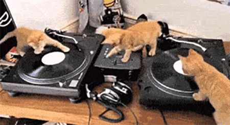DJ Kitty In The House…