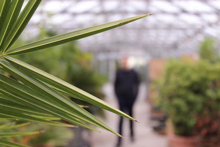 Raumbegrünung Pflanzenpflege Innenraumbegrünung, interior landscaping, Bürobegrünung, Büropflanze, Hydrokultur, Baumhaus