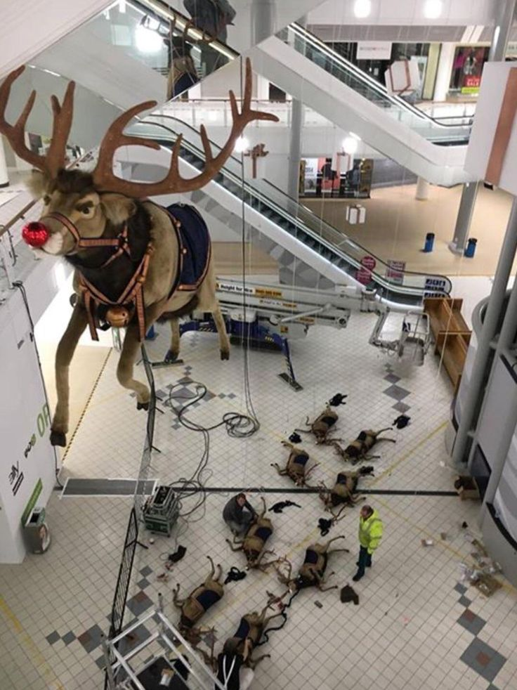 All of the other reindeer used to laugh and call him names: So he murdered them. http://ift.tt/2hfP18f #lol #funny #rofl #memes #lmao #hilarious #cute