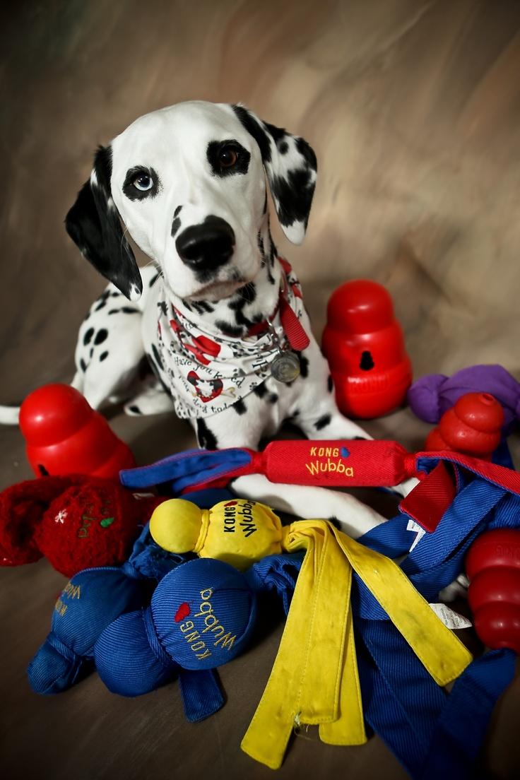 Charlie and his Wubbas! Encuentra los juguetes en Kong en nuestra tienda online para mascotas!