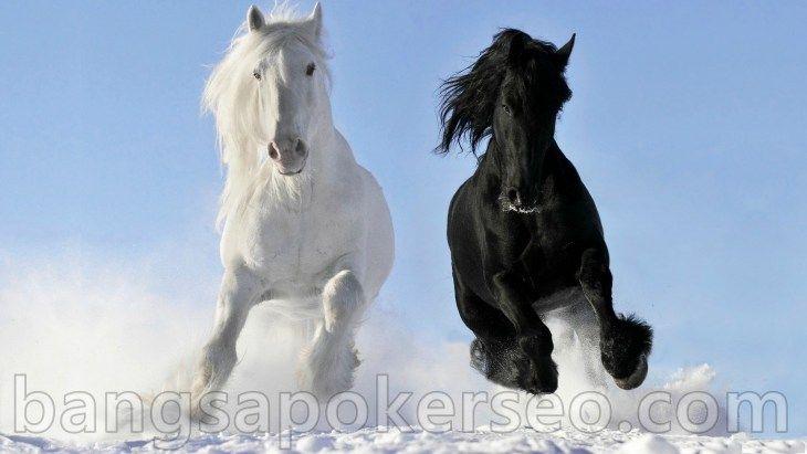 Foto Kuda Friesian Tercantik di Dunia