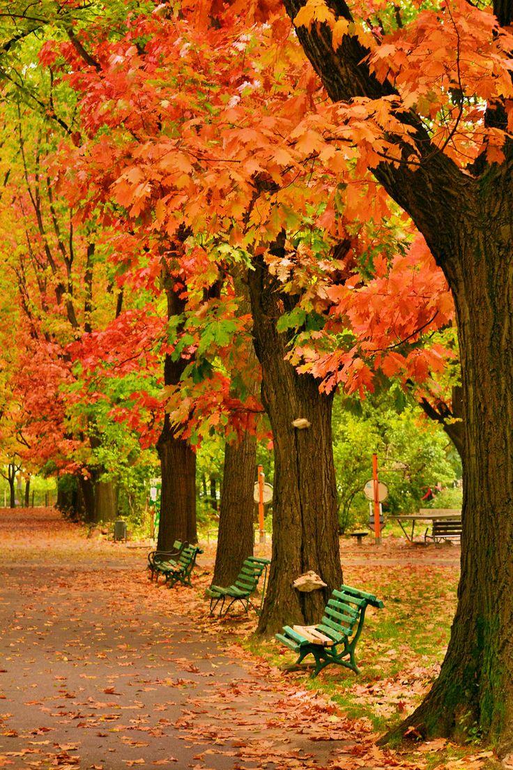 Herăstrău Park in Bucharest (by Ionut Vrabie)
