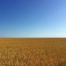 Bildresultat för österlen tree horizon