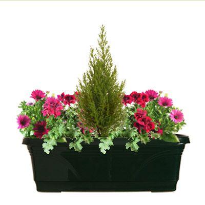 Les 25 Meilleures Id Es Concernant Jardini Res D 39 T Sur Pinterest Fleurs En Pots Jardin De