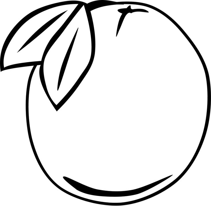 fruit melon