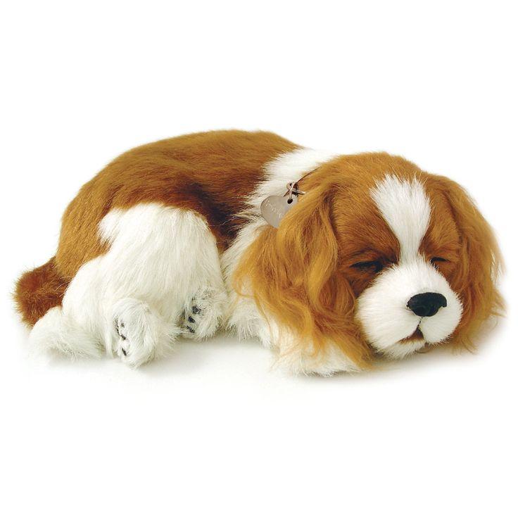 Cavalier King Charles Uyuyan Köpek   Perfect Petzzz  Tıpkı gerçek gibi...  Sevimli yavru köpek tıpkı gerçek bir köpek gibi nefes alıp veriyor ve yumuşak yatağında usluca uyumaya devam ediyor. Arada sırada fırçası ile onu taramanız yeterli.  Uyku minderi, isimlikli tasması, fırça, evlat edinme sertifikası kutusunda yer alıyor.   1 adet D alkalin pil ile yaklaşık dört ay çalışır. (Pil dahildir)  ASTM Uluslararası F 963 ve CPSIA Oyuncak Güvenlik Gereksinimleri'ne uygun olarak üretilmiştir.