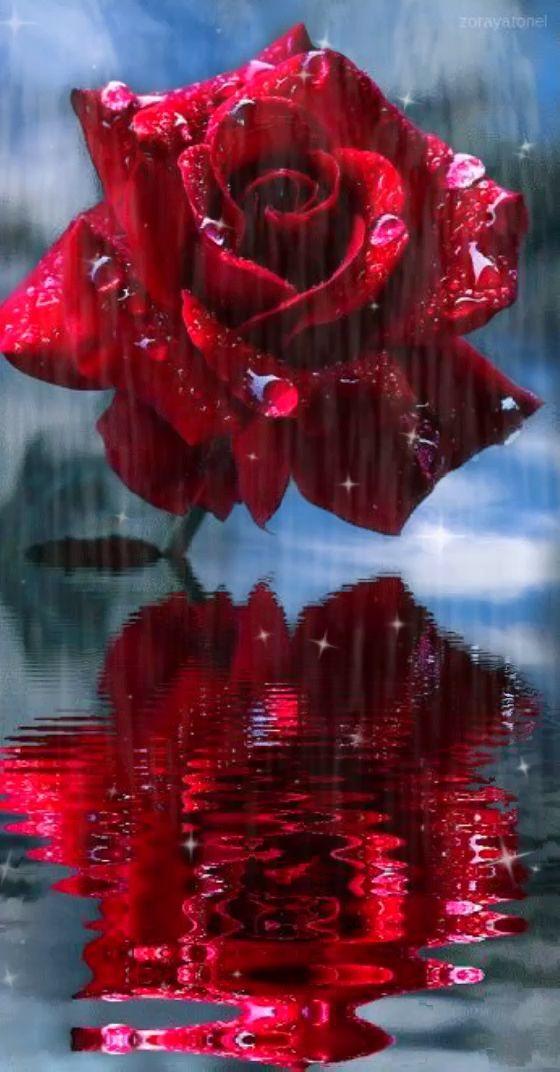 Красивые картинки гифки розы, смыслом