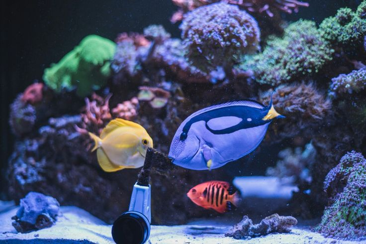 Reef 🐠 fish corales