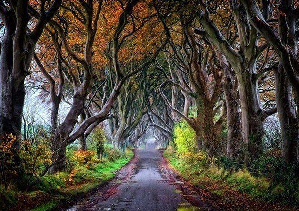 Знаменитая Темная аллея осенью, Северная Ирландия