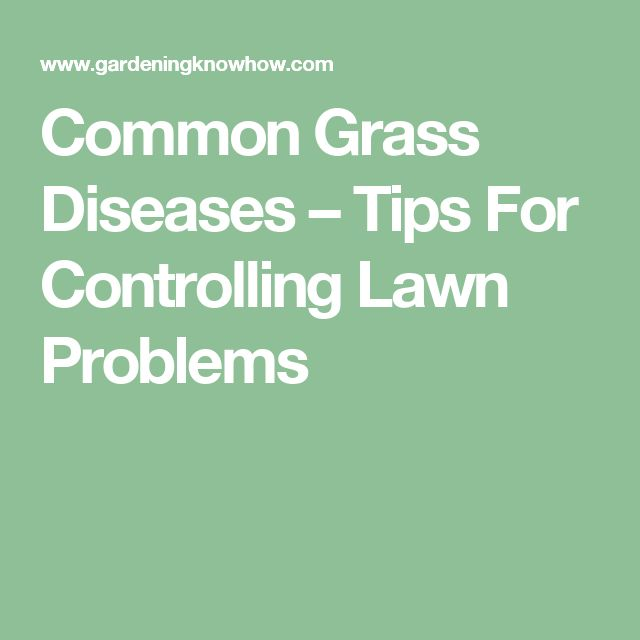 Common Grass Diseases – Tips For Controlling Lawn Problems