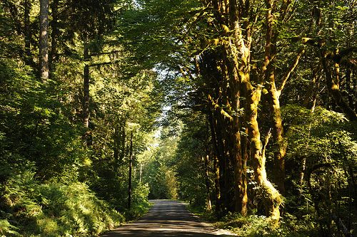 Duckabush river road, temperate rain forest, trees, Olympic National Park, North Hood Canal, Washington, USA