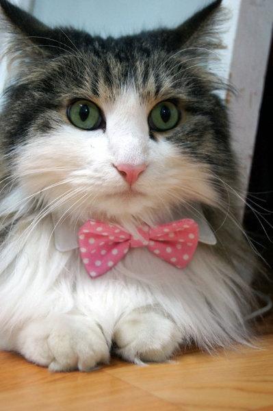 Collares para gato corbata y pajarita | Todokawaii