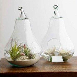 Ένας μικρόκηπος μέσα στη γυάλα! | Small Things