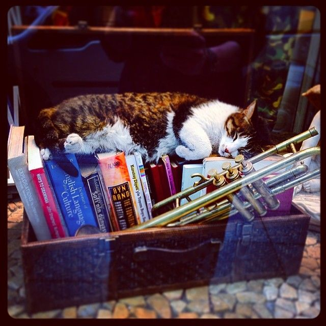 in Istanbul cats are allowed everywhere… not that they ask for permission.   21 Instagram Cat Pictures That Will Make You Pack and Leave for Istanbul Today #cats #travel #Istanbul