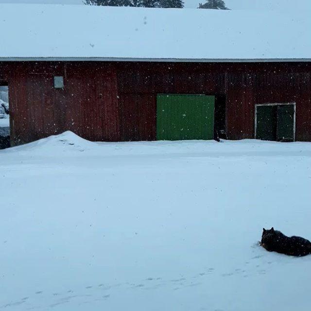 God morgon 🌨💙Det snöar o Bella gillar det🐶Men inte jag! Vi har 0 grader här nu.  Idag är det ju torsdag o det ska städas.  Ha en bra torsdag ❄🌹🌾