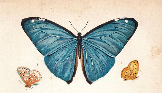 1891 Butterflies Antique Chromolithograph by CarambasVintage