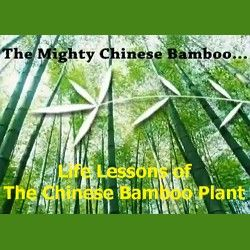 The amazing Chinese bamboo plant offers a mirror image to some of lifes simplest secrets -- patience and roots. Through the bamboo plant we are reminded that even with years of constant and consistent nurturing, we dont always see the rewards of our efforts. Yet, if we refuse to be discouraged and walk in faith, things will begin to happen. Just like the bamboo, our hopes and dreams will take root, and when they do, watch out!