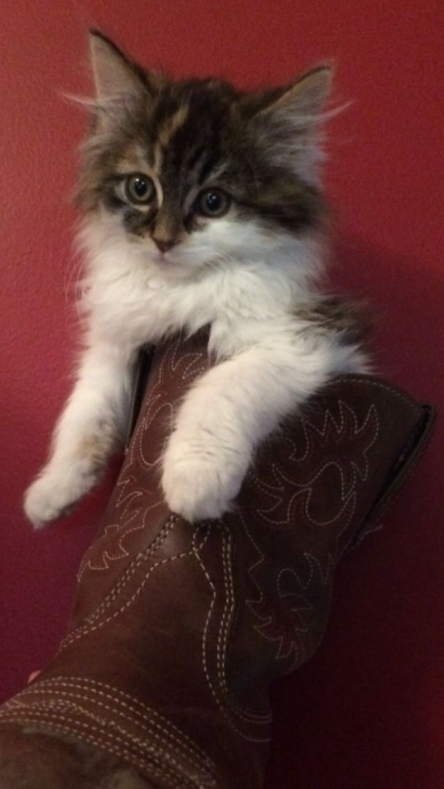 "Cali ""boot"""