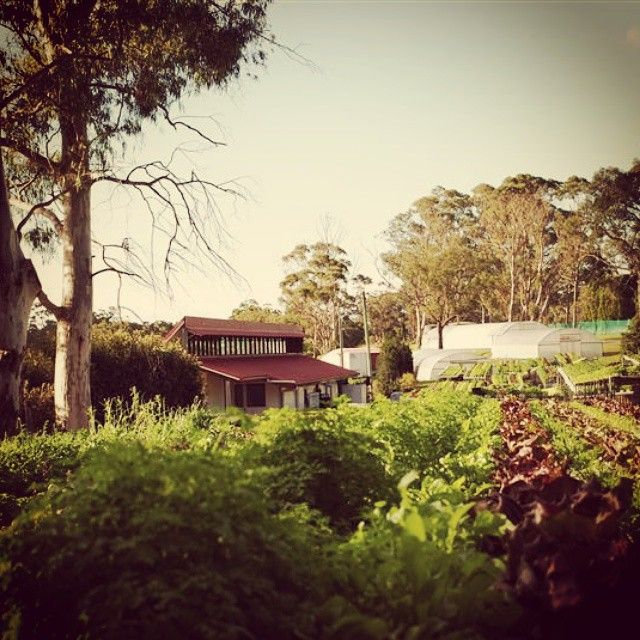Organic produce lovingly grown in Berrilee @ Darling Mills #darlingmillsfarm #microherbs