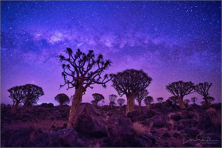 Don Smith Photography    Milky Way Galactic Center Over Quiver Tree Forest, Keetmanshoop, Namibia, Africa     Sony a7S, Zeiss Batis 18mm, f/2.8, 30 sec., ISO 6400
