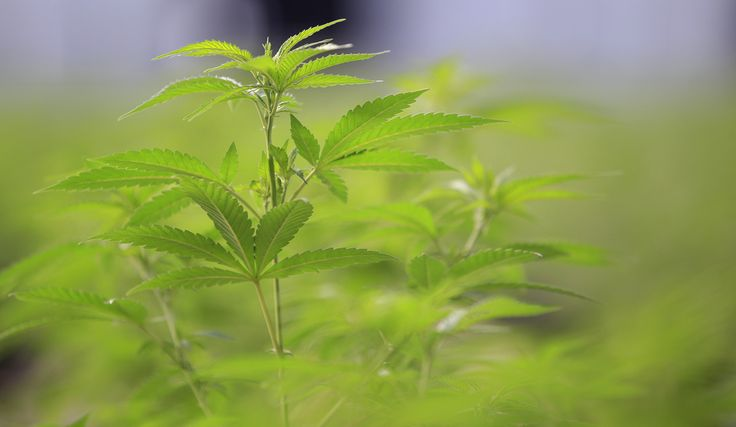 Now that Canada's Canopy Growth Corp. has become the first marijuana grower to trade on a major North American stock exchange it's gearing up for its next big challenge: convincing banks to lend it money.