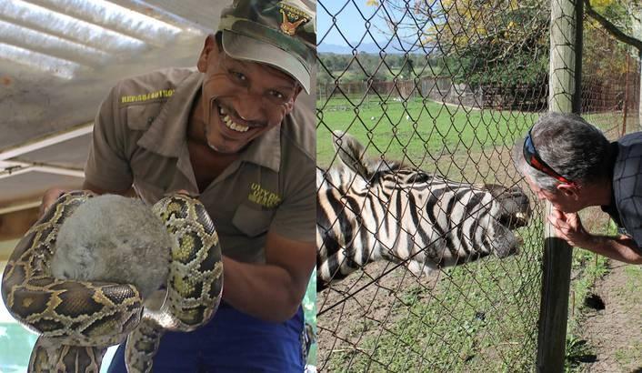 Snake and Zebra | African Animals | Pinterest