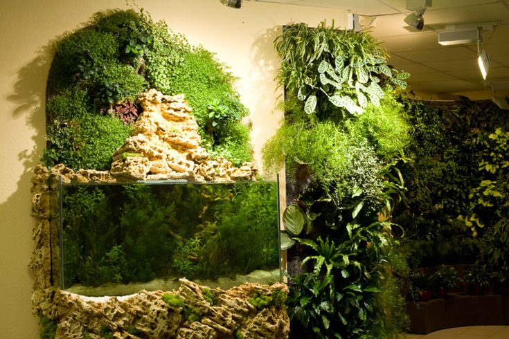 I am going to make a living wall!