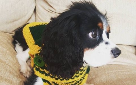 Olivia Munn's Dog Has Aaron Rodgers Sweater -- You know what dogs need more of? Clothes. Olivia Munn agrees. Her dog has himself a knitted Green Bay Packers Aaron Rodgers sweater. Just in time for game day!