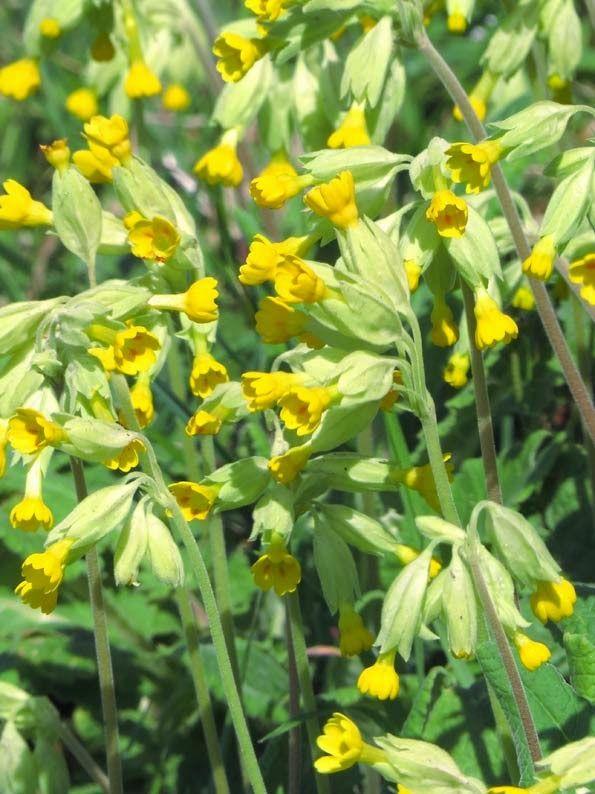 17 meilleures images propos de fleurs sauvages sur for Acheter des plantes en ligne