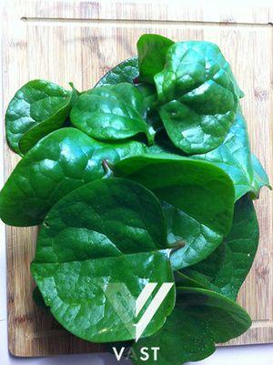 Bayam Malabar Non-transgenik benih bibit biji - Malabar Spinach Seeds