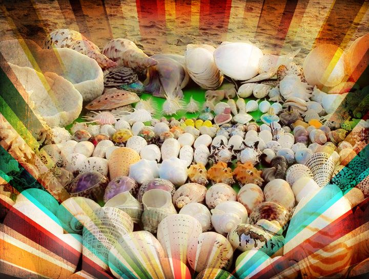 shells sold on the beach at bali