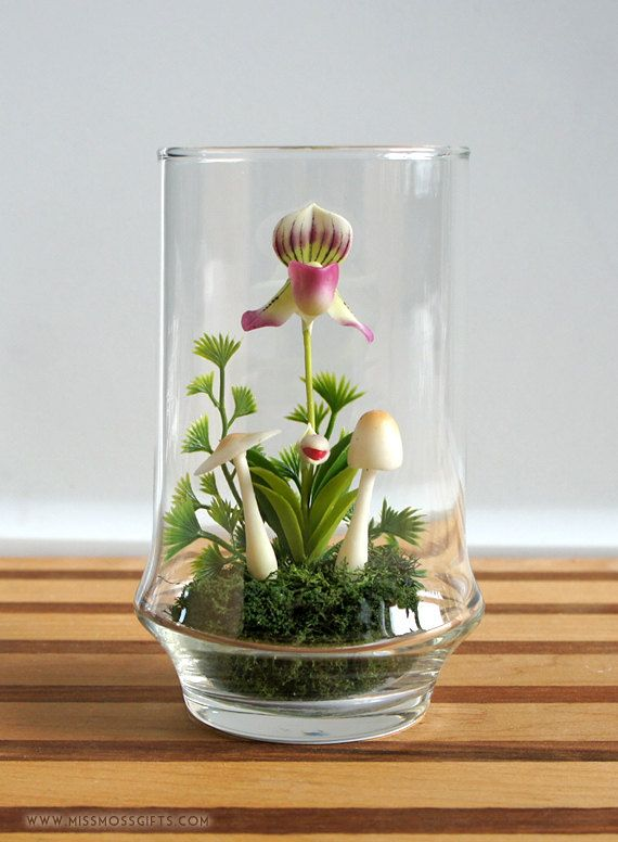 Tiny Lady Slipper Orchid Terrarium by Miss Moss