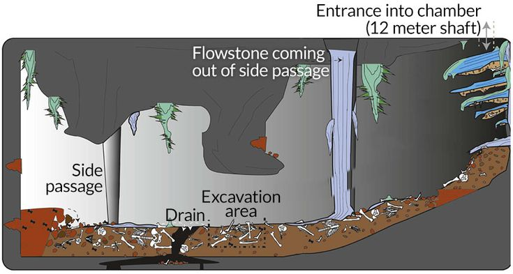 Dinaledi Chamber DEEP EVOLUTION  Homo naledi fossils were found in South Africa's Dinaledi Chamber, outlined here. Researchers debate whether this species dropped its dead through a shaft into the underground space, creating the array of bones shown on the chamber floor.